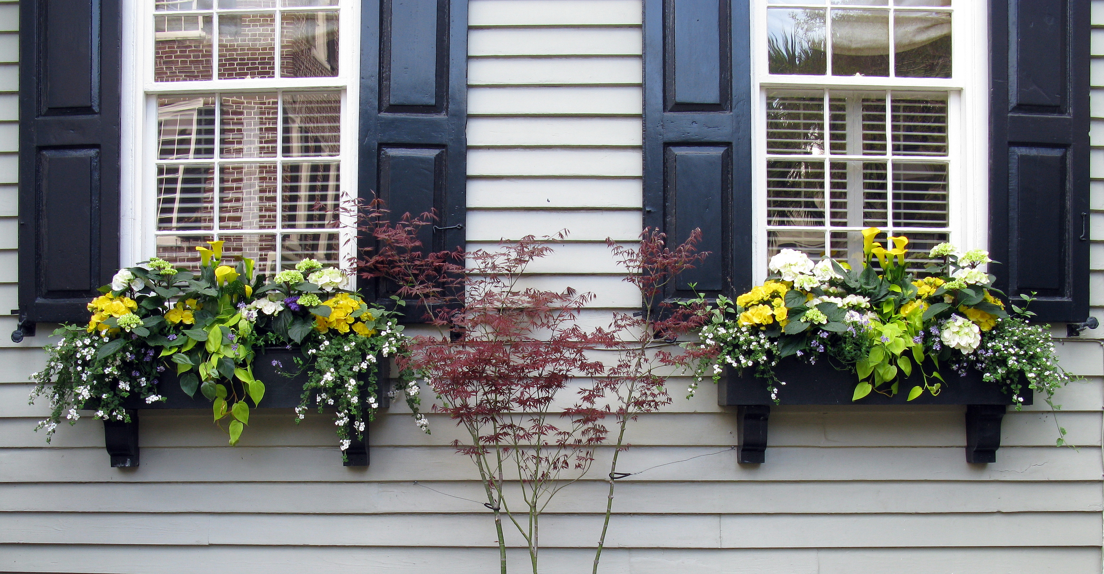 Two Window Boxes with Black Shutters, Tradd Street, Charleston, SC