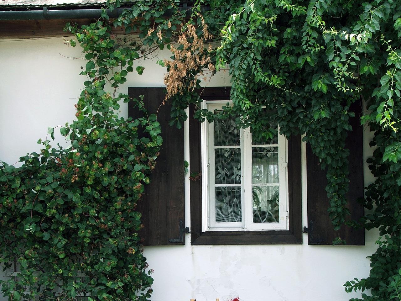 window-629800_1280